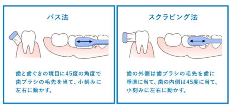 「バス法」「スクラビング法」を理解して、効率の良い歯周病予防を