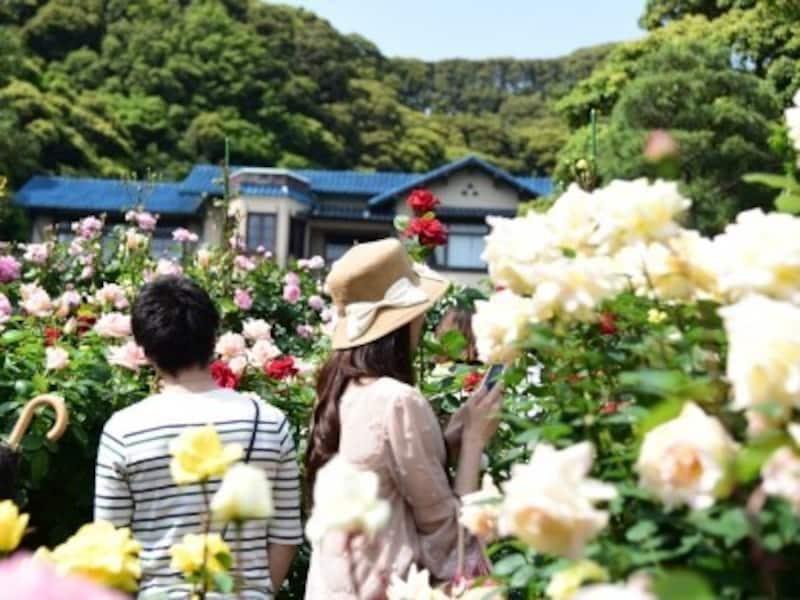 ローズガーデンに咲き乱れるバラ