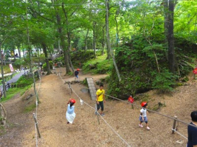 木立を抜けるジップロープ