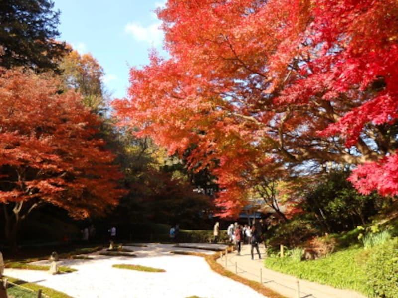 本堂後庭園の紅葉