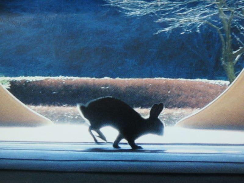 明月院パンフレット表紙の写真のウサギ