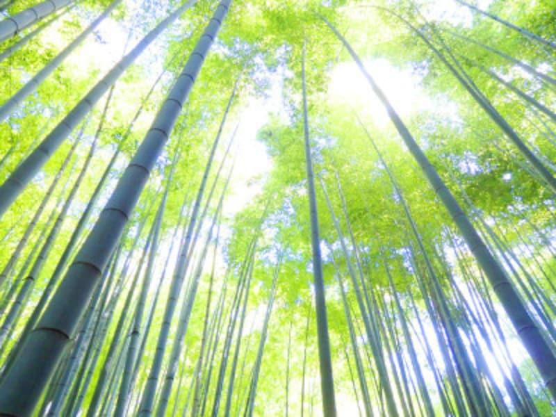 美しい緑の竹林