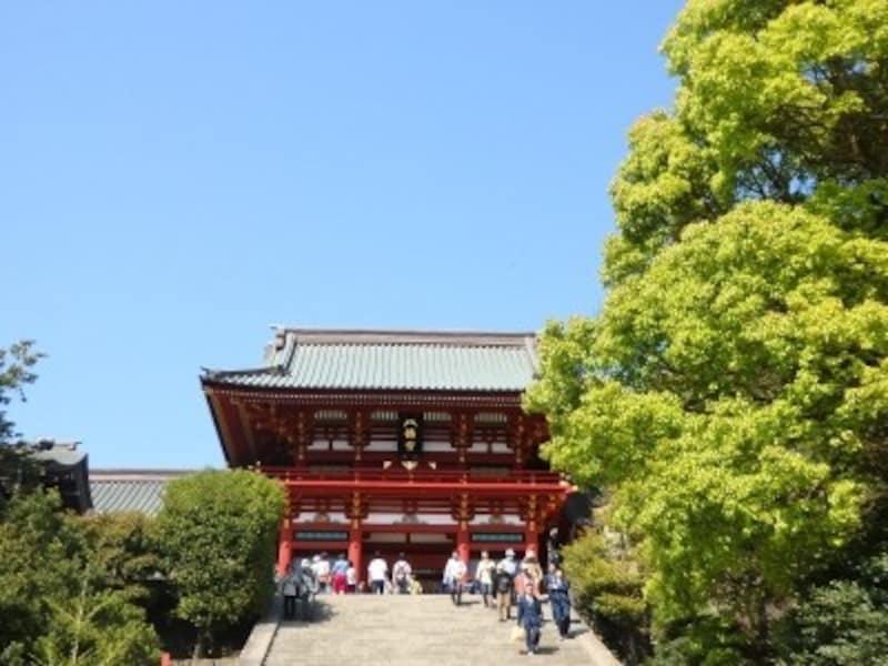 鎌倉の町を象徴するかのような鶴岡八幡宮