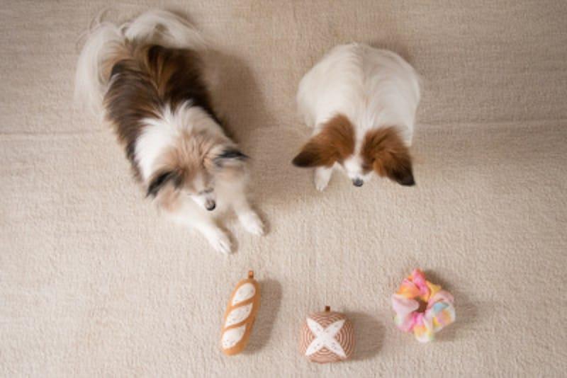 犬,わんこ,わんちゃん,愛犬,病気,治る,量,吐く,嘔吐,吐出,対応,家でできること,治療,危険