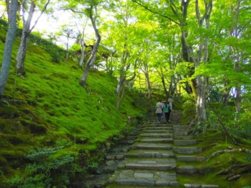 常寂光寺の苔が美しい末吉坂
