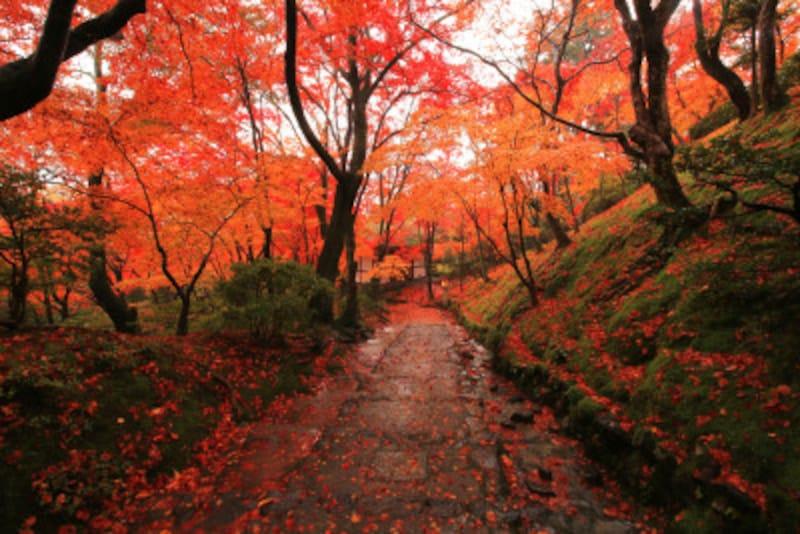 常寂光寺の紅葉が綺麗な秋の境内