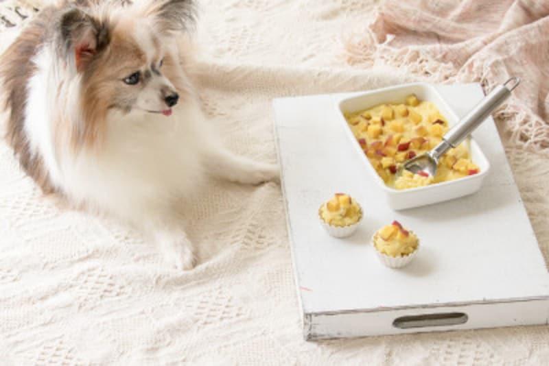 犬 わんこ わんちゃん 犬用 わんこ用 手作り ケーキ 簡単 誕生日 おやつ