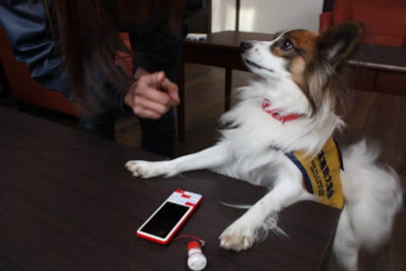 聴導犬(メールの着信音)