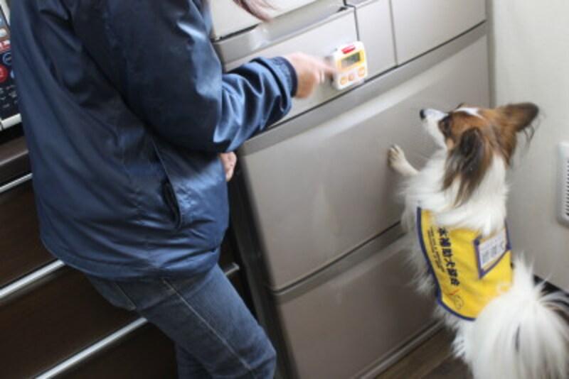 聴導犬(キッチンタイマーの音)