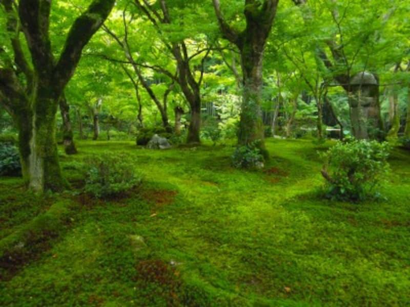 圓光寺の苔庭・十牛之庭