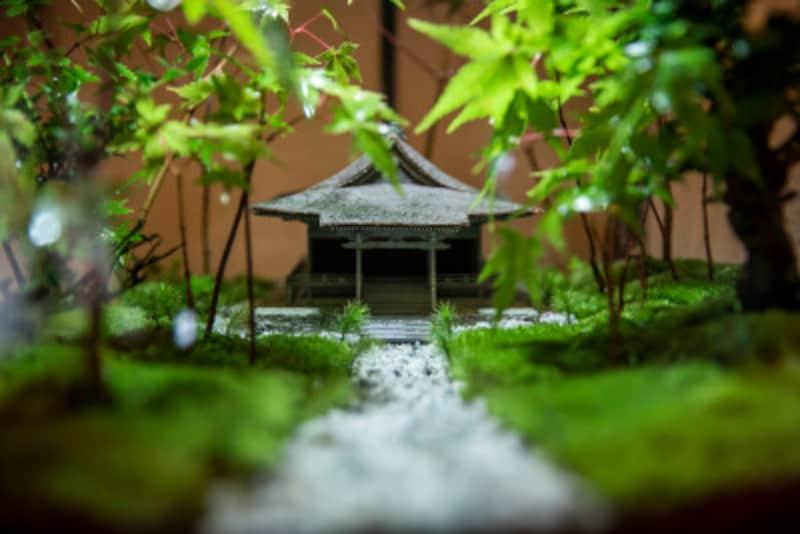 往生極楽院のコケ寺リウム