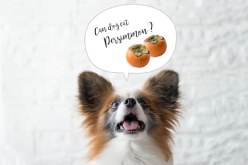 犬に柿を与える際の注意点