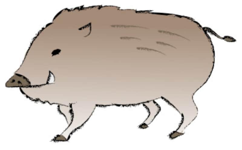 年賀状 いのしし亥猪のかわいい無料イラスト2019年干支