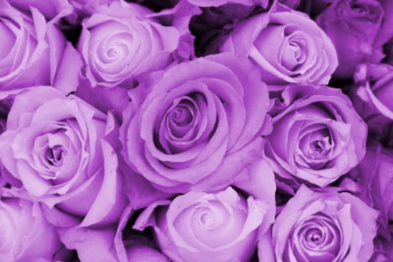 バラ(薔薇)の花言葉・紫