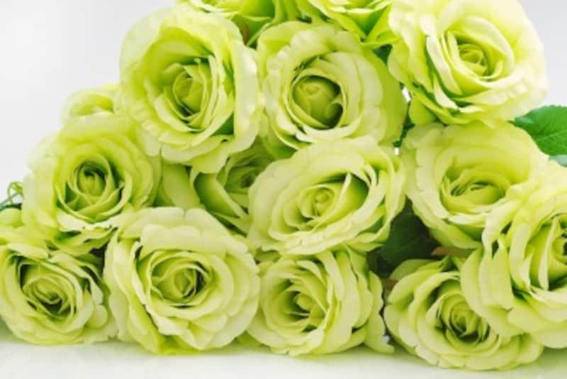 バラ(薔薇)の花言葉・緑