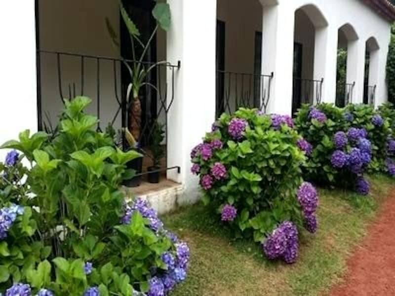 季節ごとに違った植物を鑑賞する楽しみも。初夏は紫陽花がキレイ
