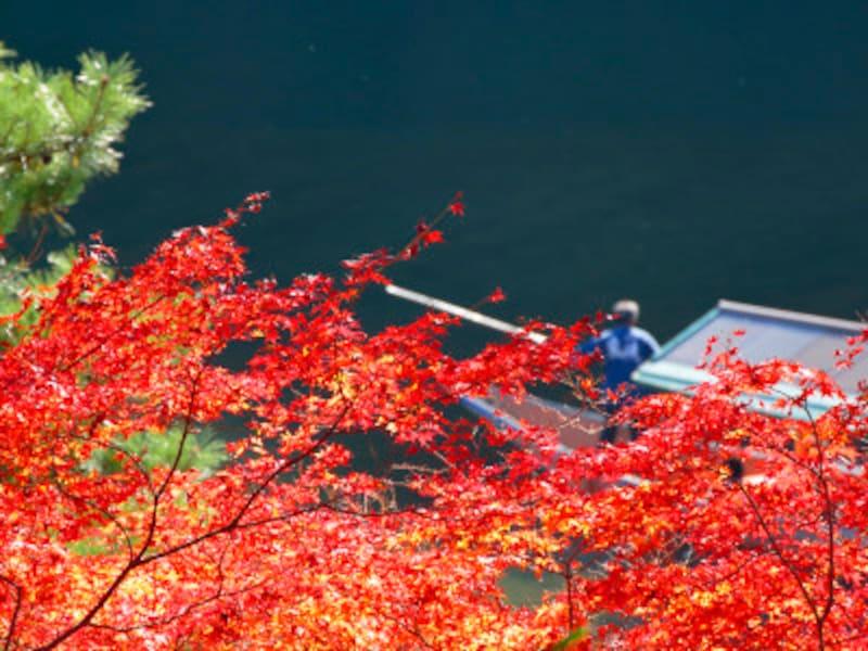 京都の紅葉を見に行くなら、いつ頃がオススメ?