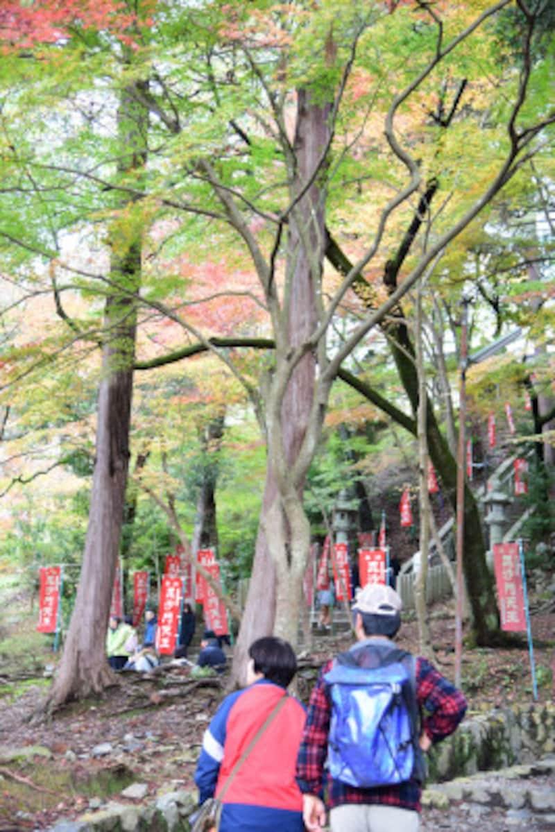 山科の紅葉の名所、毘沙門堂。2017年11月19日訪問時、境内は紅葉が進んでいたが、参道付近はまだ緑が多かった
