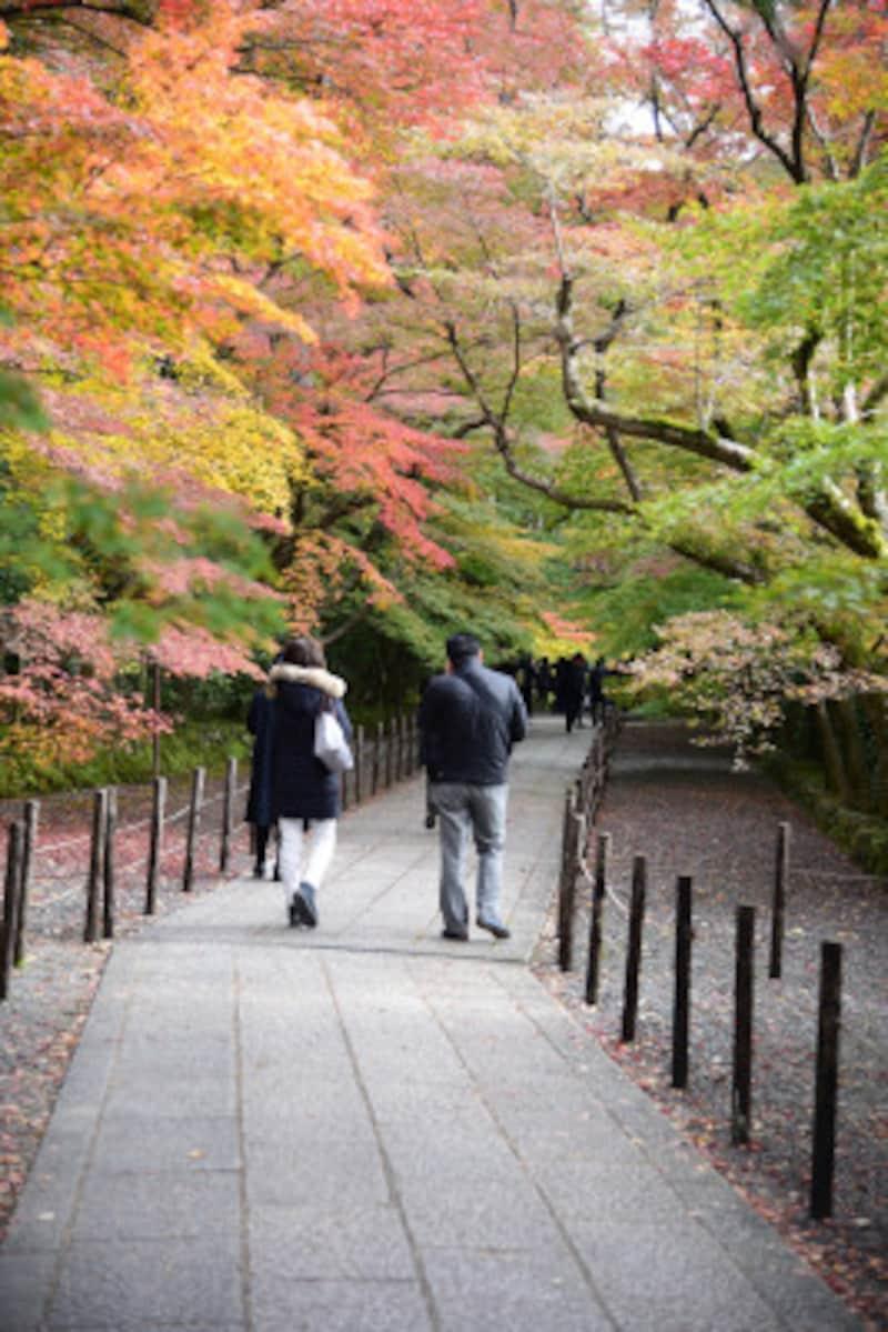 京都市の南西に位置する長岡京市の紅葉の名所、光明寺の参道。2017年11月20日の参道の様子