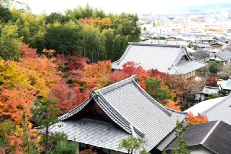 圓光寺は裏山に登ると、境内の紅葉と京都市中の風景が同時に楽しめる