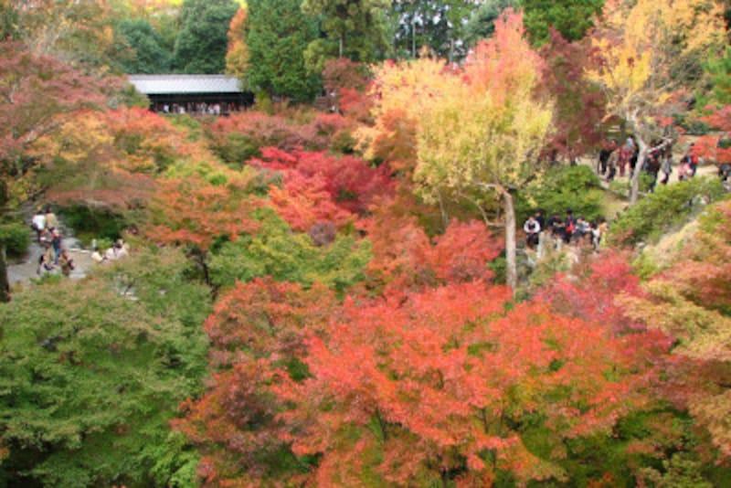 雄大な紅葉が楽しめる東福寺。2016年から紅葉の時期に限り、境内の橋上での写真撮影が禁止に