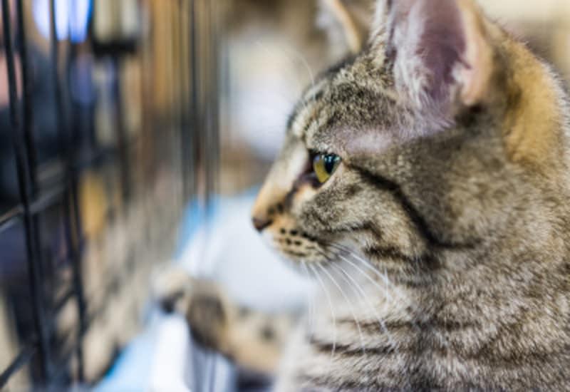 猫を飼うのにケージは必要か