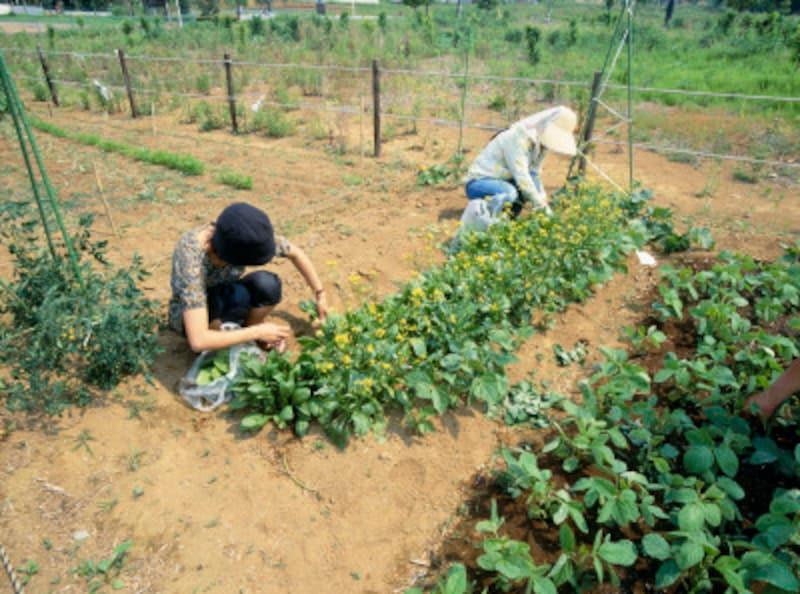街で農作業が学べる市民農園