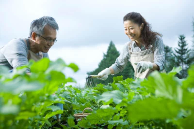 手間と時間を解決する体験農園の登場