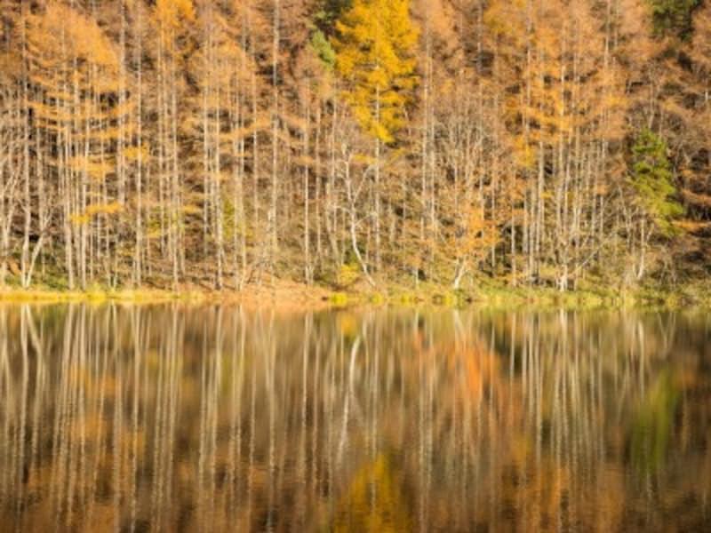 秋の自然・植物をイメージする男の子の名前は、星、北斗、晶、実、楓、馬に関してや、体育の日に関する漢字が人気
