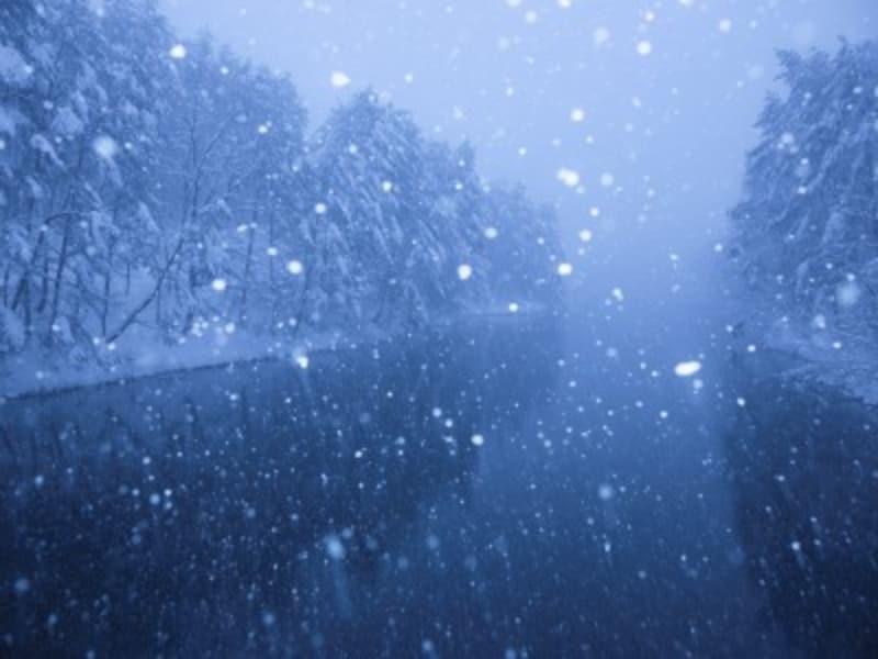 冬の自然・植物をイメージする男の子の名前は、新、聖夜、冬、柊の字に関する漢字が人気
