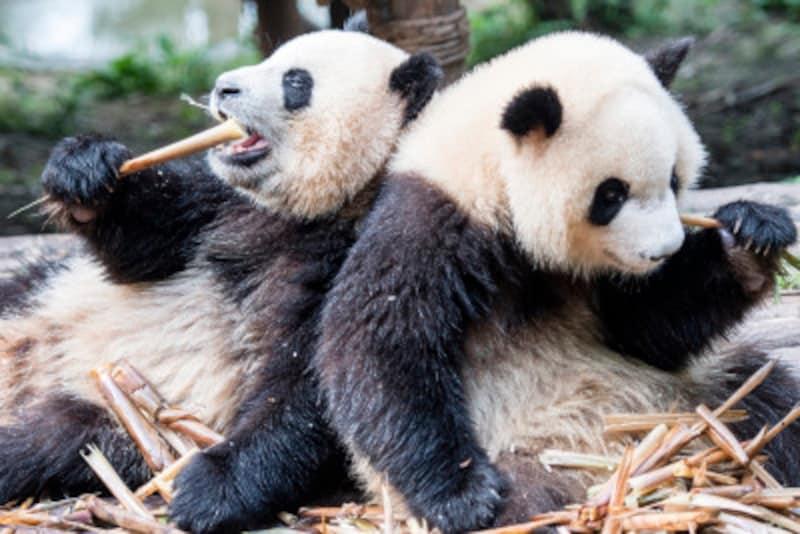 お得に中国語を習得する方法・おすすめのテキスト