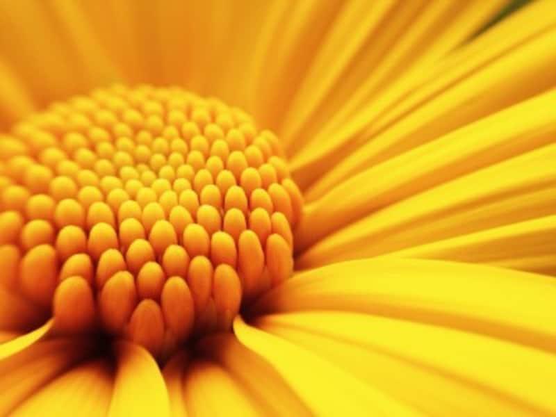 好きな色で診断!恋愛の傾向と対策:黄色が好きな人