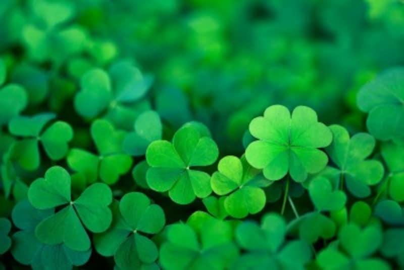 好きな色で診断!恋愛の傾向と対策:緑が好きな人