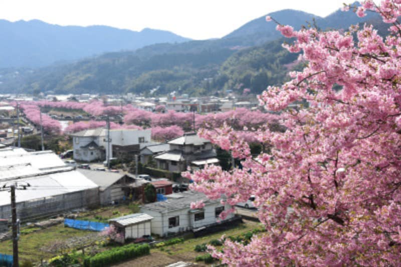 「涅槃堂(ねはんどう)」の「桜見晴台」からの眺め