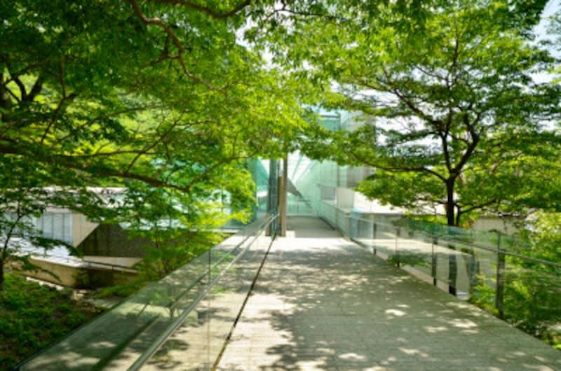 新緑の季節の「ポーラ美術館」。周囲の景観に配慮し、地上2階、地下3階建てになっている。設計:安田幸一。2002年開館