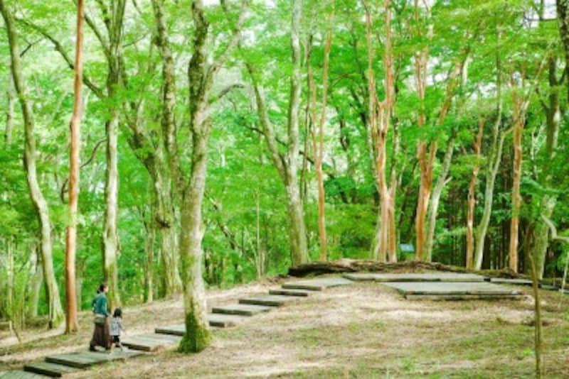 美術館周囲の全長670mの遊歩道「風の遊ぶ散歩道」は、ヒメシャラやブナの林が広がっている。新緑と紅葉の季節がおすすめ
