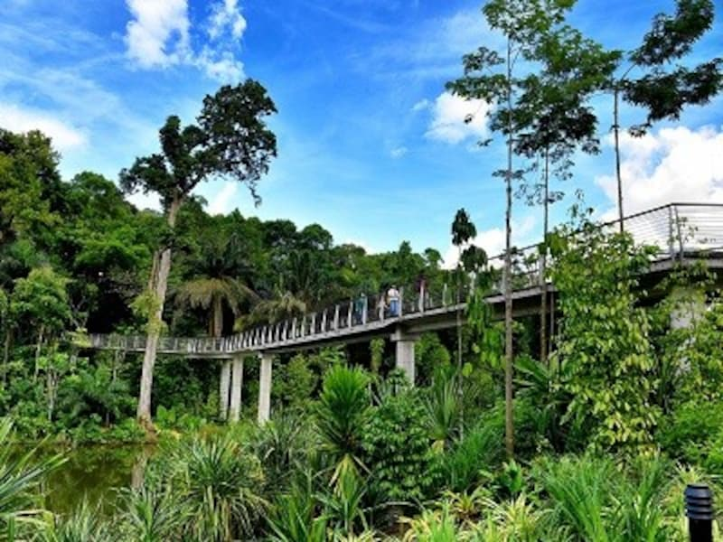 シンガポール植物園なら珍しい植物に会える