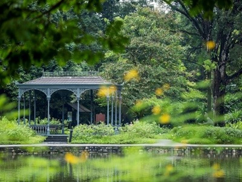 シンガポール植物園を楽しむなら、無料のツアーに参加するのもおすすめ