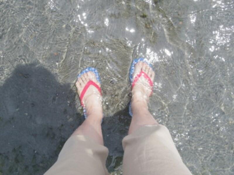 浜名湖の透明度の高い水の中には貝がいっぱい