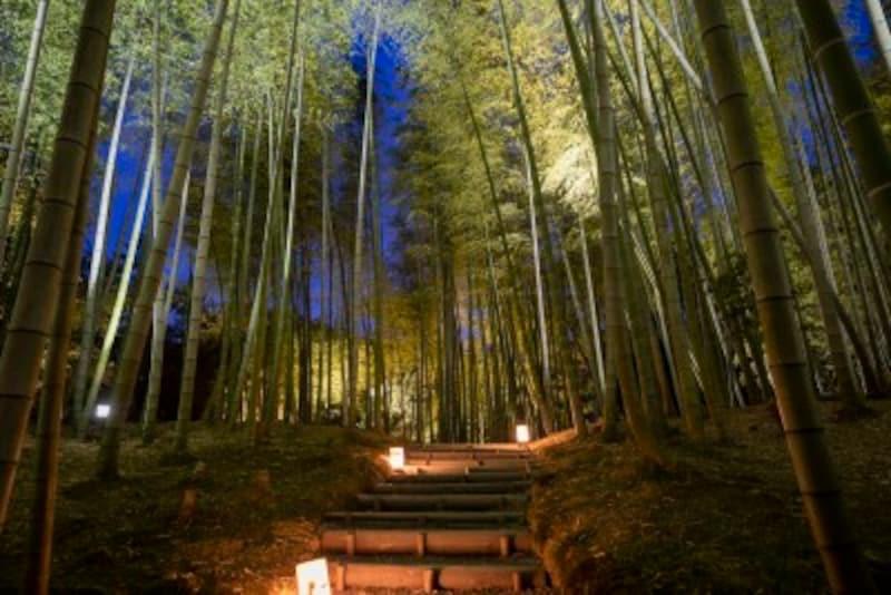 ライトアップされる竹林