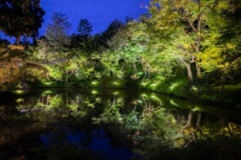 ライトアップされる高台寺庭園