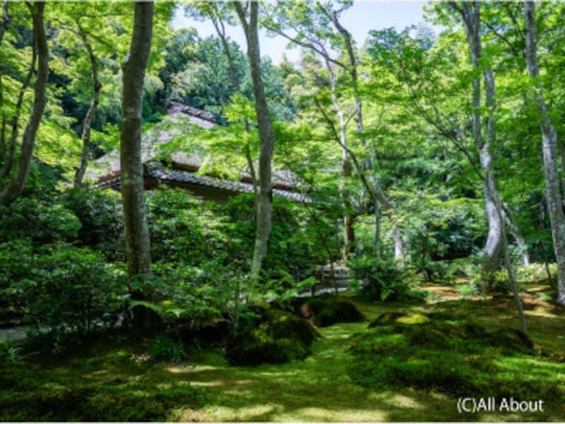 京都のお寺巡り3.祇王寺の苔庭