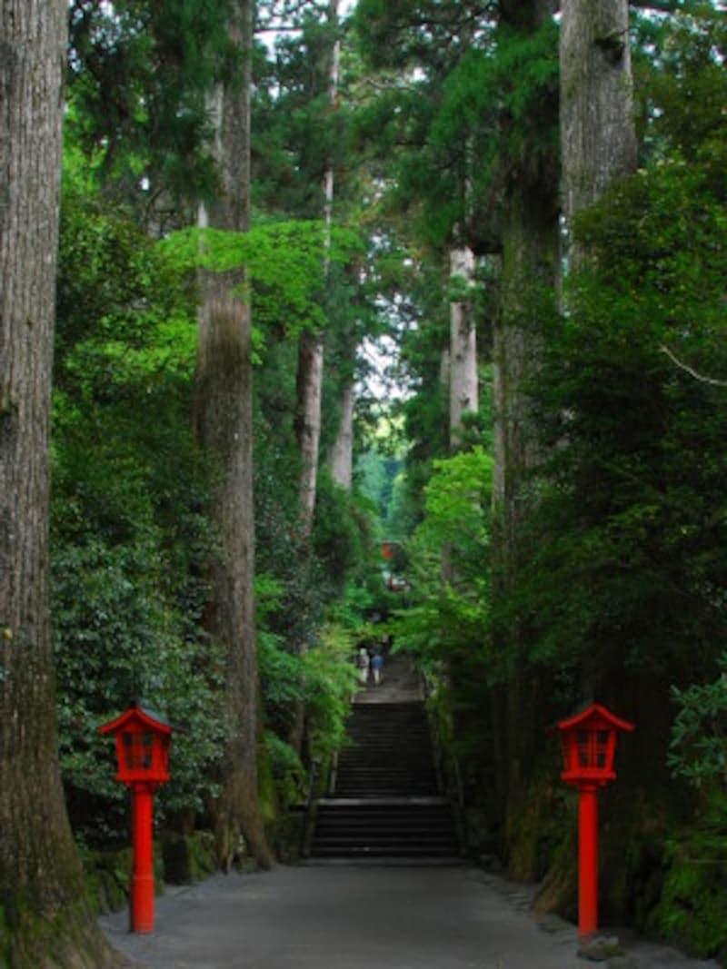 箱根ひとり旅の観光スポット:箱根神社の参道