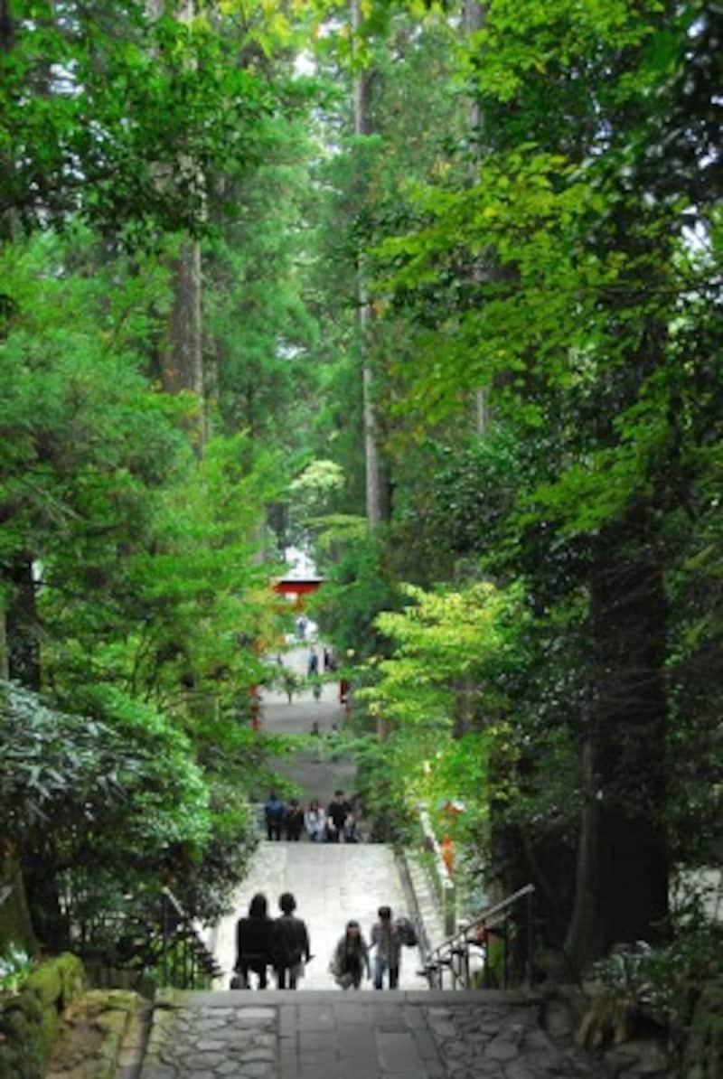 箱根ひとり旅の観光スポット:箱根神社の正参道
