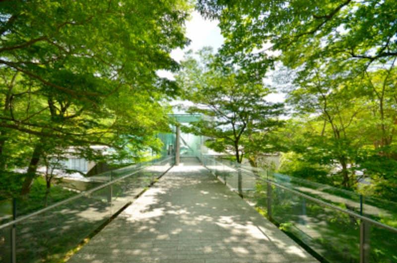 箱根ひとり旅の観光スポット:エントランス