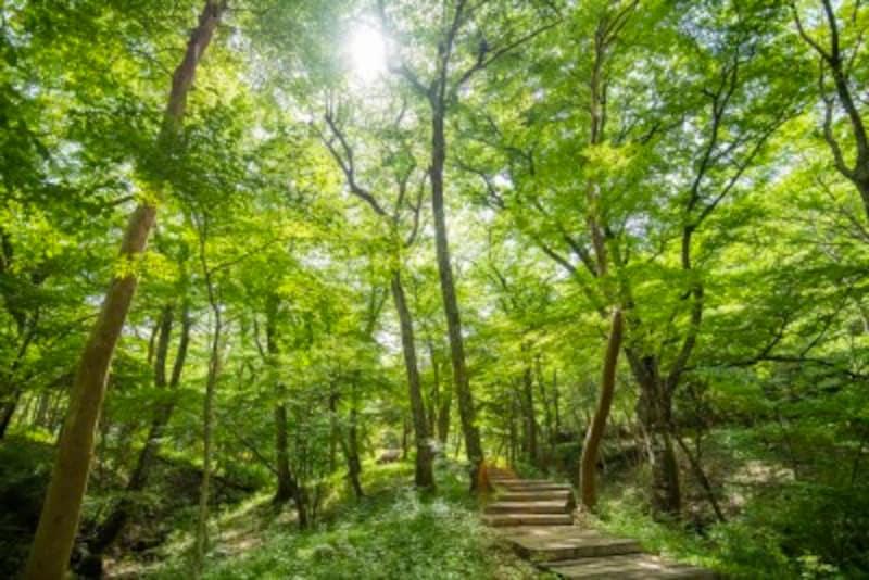 箱根ひとり旅の観光スポット:森の散歩道