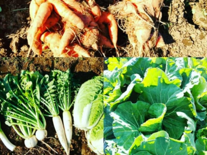 柔ママさんが収穫した家庭菜園の野菜