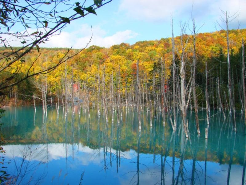 北海道の絶景パワースポット秋・青い池(美瑛)