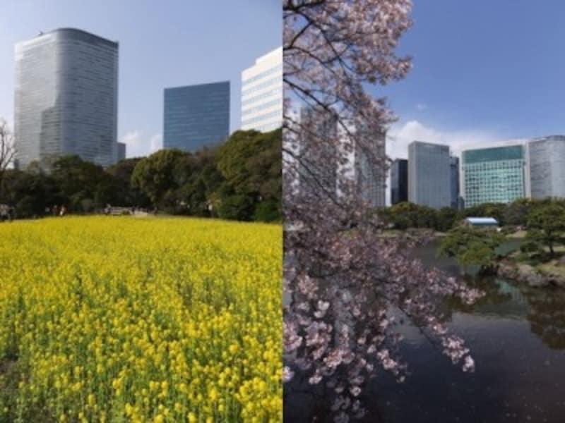 春には見事な菜の花畑や桜も楽しめる浜離宮恩賜庭園
