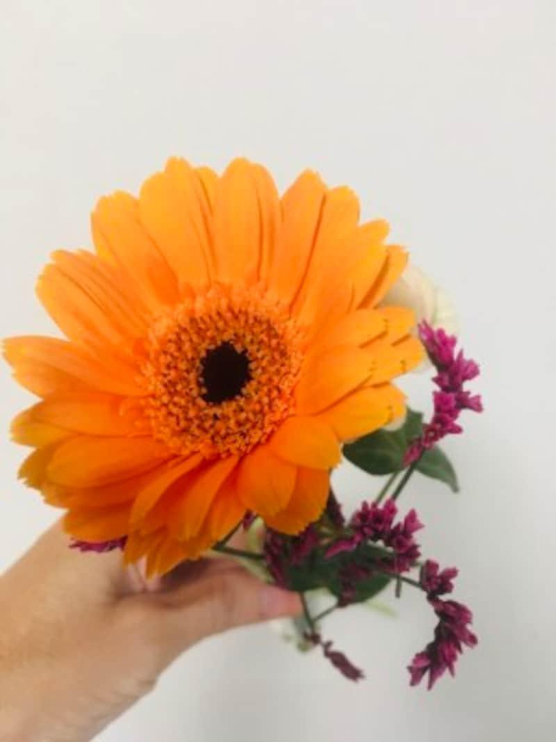 わが家に届いたばかりの花。元気です!